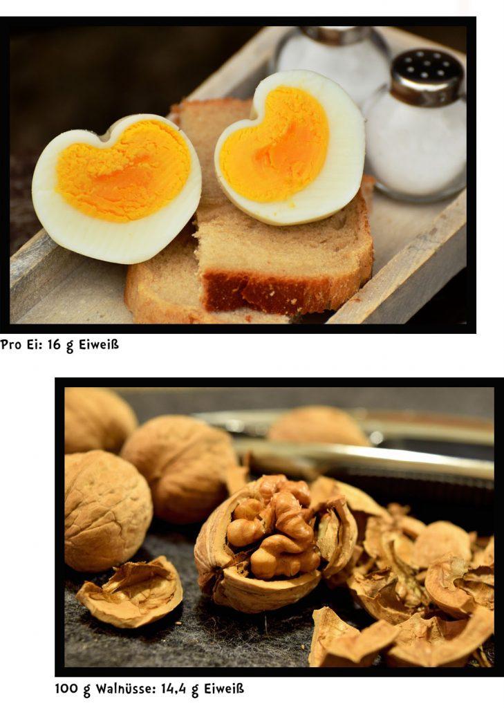 Protein Proteine Eiweiß